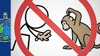 Why You Shouldn't Give Ginger To Monkeys (and other animal sayings)
