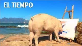 Baixar Pigcasso impresiona al mundo con sus obras de arte    EL TIEMPO