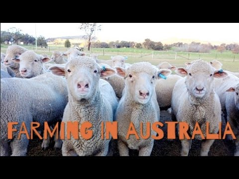 WORKING HOLIDAY VISA I Farming in Australia