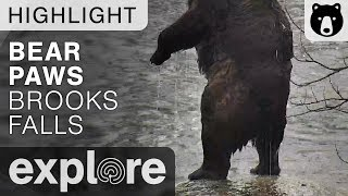 Bear Paws and Claws - Brown Bears Live Cam Highlight 10/22/17