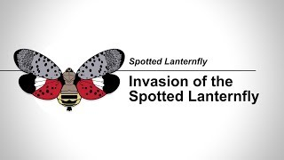 SLF: 1-1 Invasion of the Spotted Lanterfly