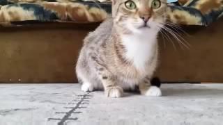 Напугали котенка