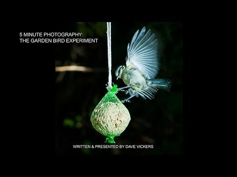 5 Minute Photography: The Garden Bird Experiment