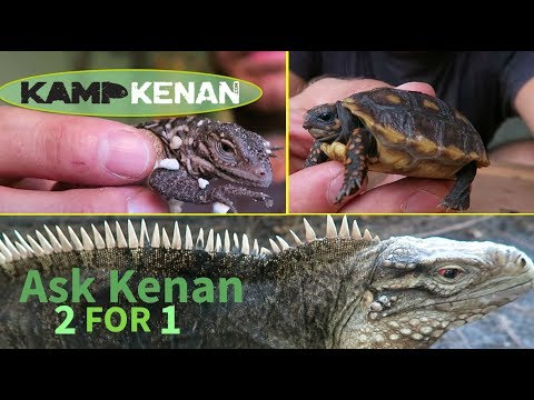 Tortoise Hatchling Instructions plus Lola & Guapo Egg Info