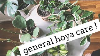 hoya plant care tips! | easy care house plants