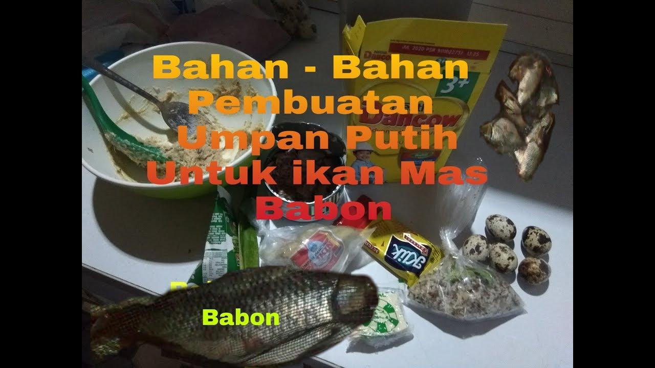 Umpan Putih Ikan Mas Babon Mancing Malam Hari Youtube