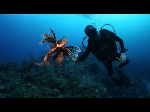 Lionfish Roundup - Grand Cayman