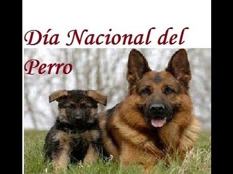 Dia nacional del perro en el jardin botanico de caguas for Actividad de perros en el jardin botanico de caguas