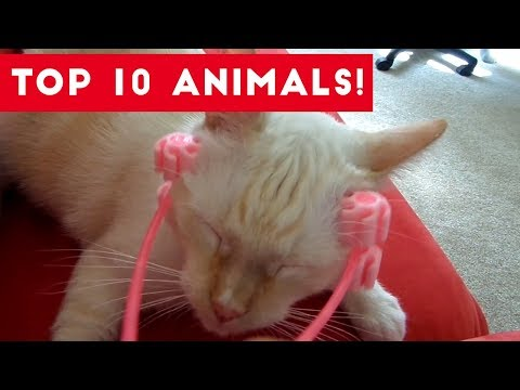 Top Ten Funny/Cute Pet Videos of August Part 2