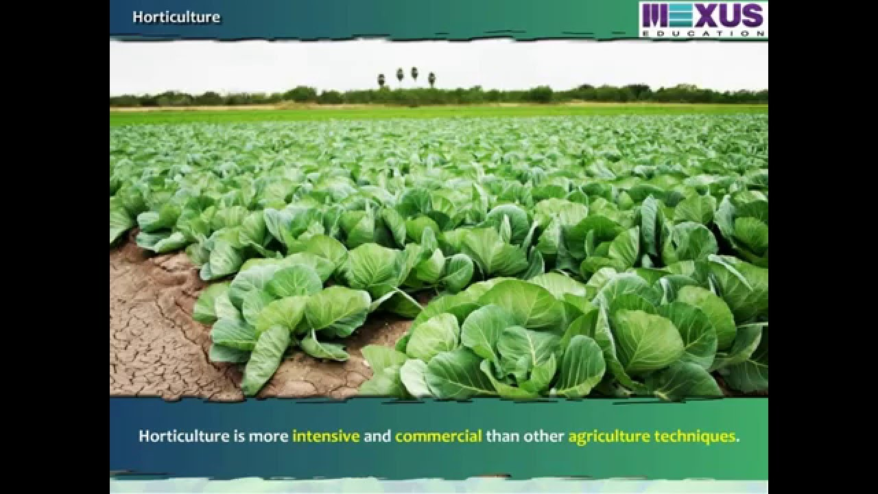 horticulture and crops