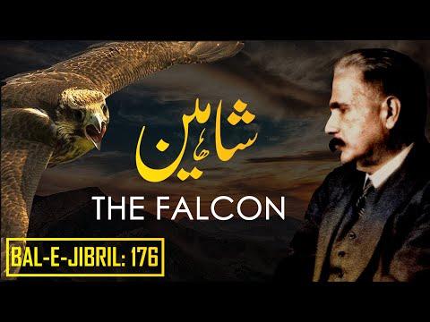 Bal-e-Jibril: 176 | The Falcon | Shaheen | Allama Iqbal | Iqbaliyat | AadhiBaat