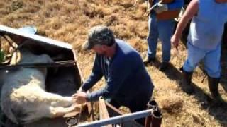 Bar L Ranch Field Tagging