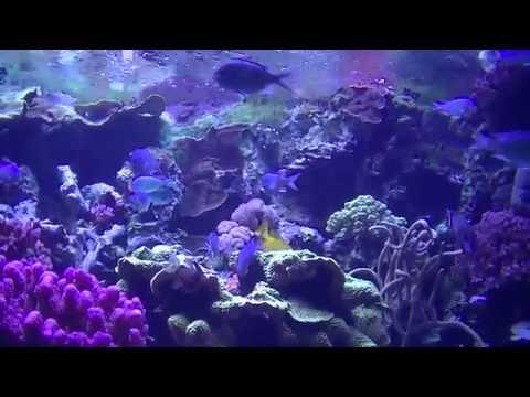 Sea world California, AQUARIUM OF THE PACIFIC