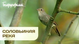 СОЛОВЬИНАЯ РЕКА    Документальный фильм   Уникальные съемки