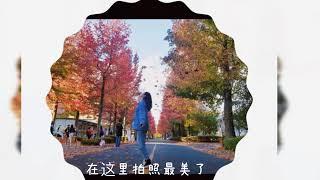 05 【広島留学】たのしい広島