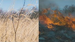 Prescribed Fire On An Illinois Prairie