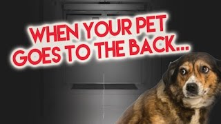 The Vet Takes Your Pet to the Back... Then what???