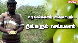 Benifits of Amla farming | Kumudam