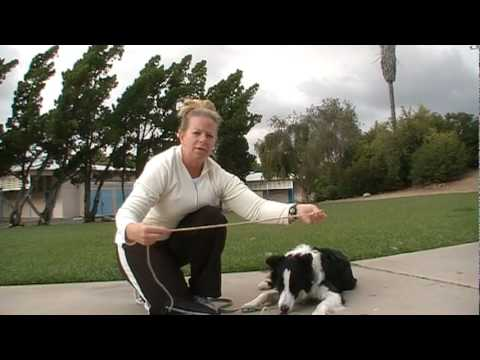 Off Leash dog Training -