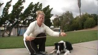 "Off Leash Dog Training - ""go Play"" Game"