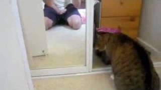 Кот VS. Зеркало (прикол)
