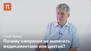 Ожирение как проблема современной медицины - Юрий Яшков(Источник - http://postnauka.ru/video/30606 Какова история изучения ожирения как заболевания? Какие причины приводят к..., 2014-08-21T09:47:18.000Z)