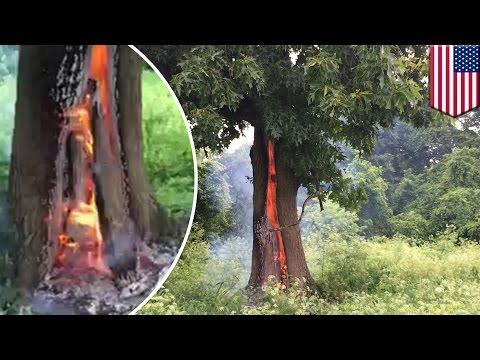 พายุฟ้าผ่ากระหน่ำ ต้นไม้ลุกไหม้ ไฟท่วม