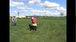 Eich Vom Leerburg German Shepherd Training