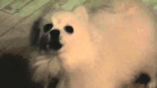 Kanye West - I Am A Dog [YEEZUS]