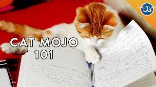 Understand Your Cat's Behavior!