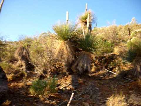 Flinders rangers Port Augusta south Australia