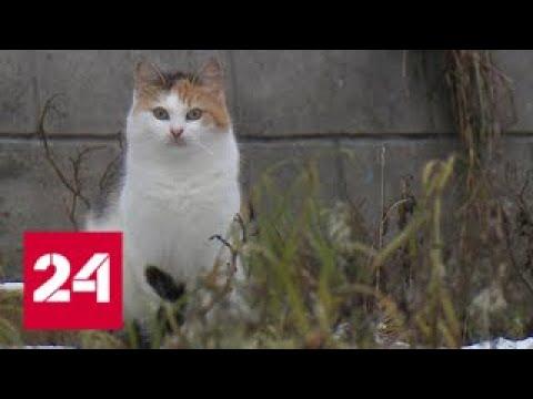 Вести. Дежурная часть от 28 ноября 2017 года (21:20) - Россия 24