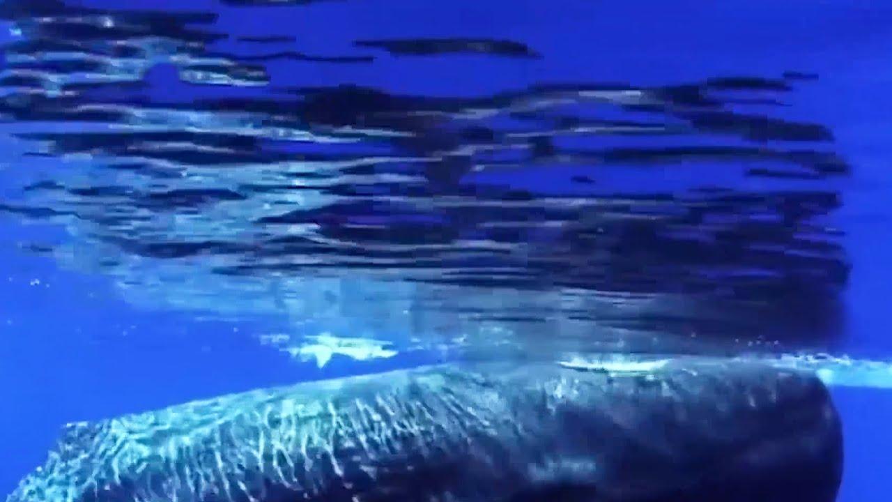 被鲸鱼吞进肚子之后,人还有希望活着吗