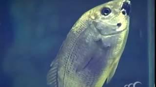 видео Океанариум в Анапе на Пионерском проспекте