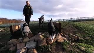 Dogs Trust Darlington - Rango