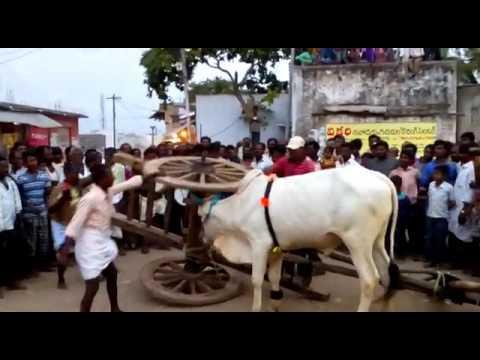 bull lifting the craft/ ఒంగోలు గిత్త పవర్