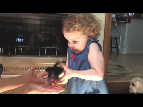 Toddler Freaks Out About Tiny Bird