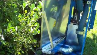 Walnut Hills Aronia's Machine Harvester