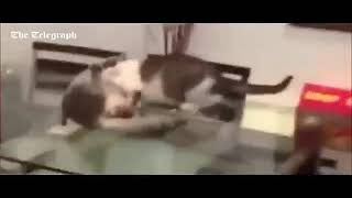 Коты джон сины сборник