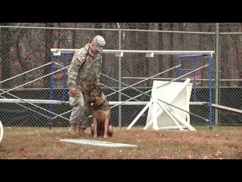 military-working-dog-(k9)-certification-with-the-947th-mp-detachment