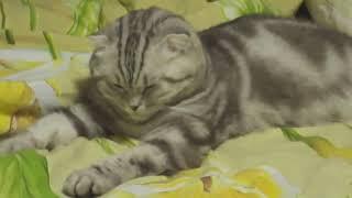 ТОП 10 самых смешных приколов с кошками Funny Cats