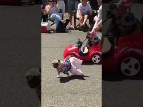 Pug Crawl 2017 - YouTube