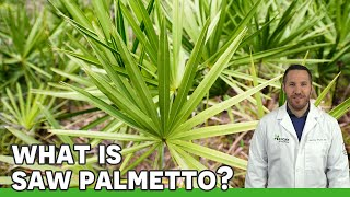 Saw Palmetto | Ask the ND with Dr. Jeremy Wolf