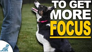 Is Your Dog Easily Distracted? These 5 Tips Will Change EVERYTHING