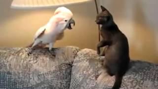 Смешные моменты про кошек с озвучкой