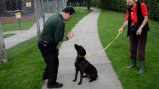 Dogs Trust Kenilworth: Keenan