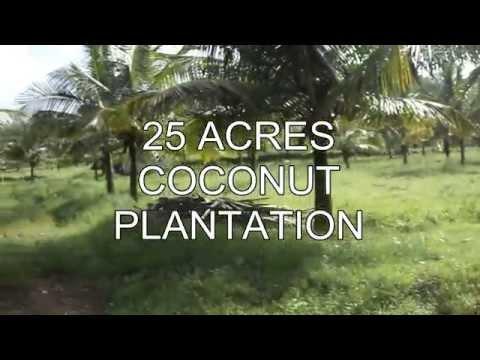 25 ACRES COCONUT