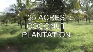 25 ACRES COCONUT PLANTATION  ,53 ACRE  WITH COW FARM