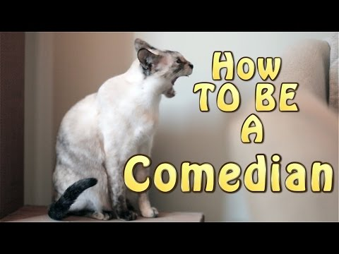N2 the Talking Cat S4 Ep13 - How to be a Comedian