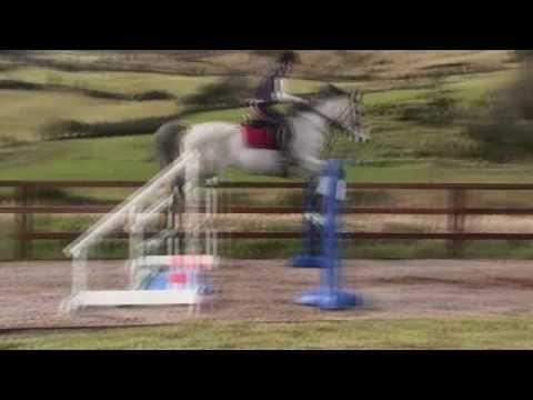 ~Kody~ The World's Most Honest Horse.